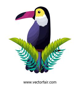 exotic toucan bird leaves tropical