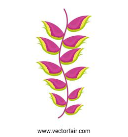 exotic heliconia flower nature tropical isolated icon