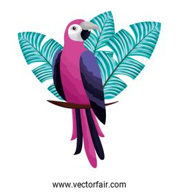 exotic parrot bird leaves tropical