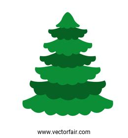 pine tree plant on white background
