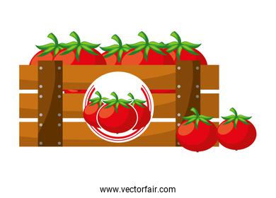 wooden basket tomatoes on white background