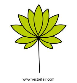 leaves tropical on white background