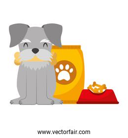 domestic dog with food