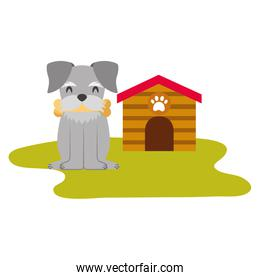 domestic dog with house and bone