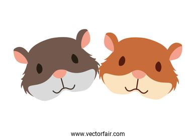 hamsters rodent on white background