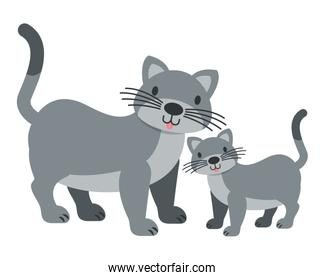 cats pet on white background