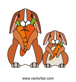 cute rabbits on white background