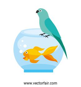 canary and goldfish in bowl