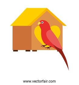 isolated red parrot with wooden house pet