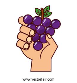 hand with grapes on white background