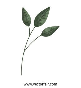 branch leaves nature on white background