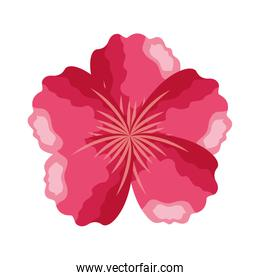 pink flower ornament on white background