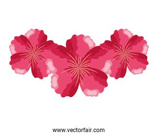 pink flowers decoration on white background