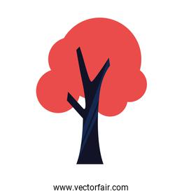 red tree nature on white background