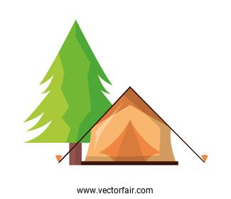 tent camping tree pine