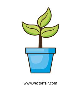 potted plant nature