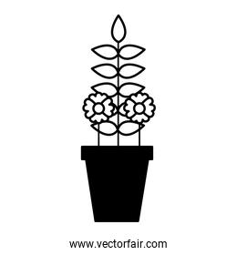 potted flower decoration