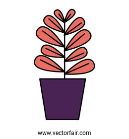 potted plant decoration