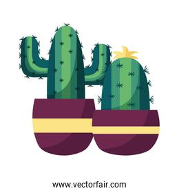 Isolated cactus inside pots vector design