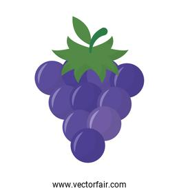Isolated grapes fruit vector design