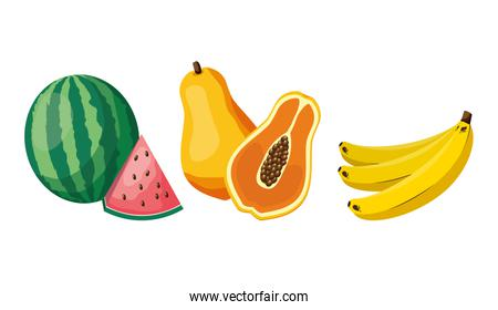 tropical fruits design