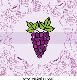 grape fruits nutrition background pattern drawing color