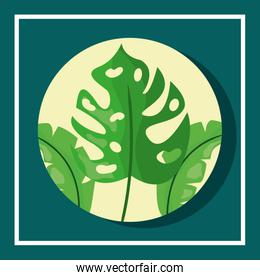 tropical leaves round banner monstera foliage