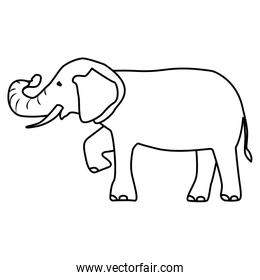 isolated elephant draw