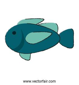 Isolated fish design
