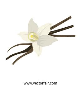 vanilla flower and pods icon image