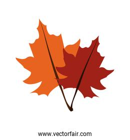 fall leaves icon image