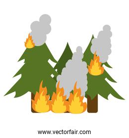 pine tree forest on fire icon image