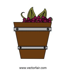 Grapes in bucket