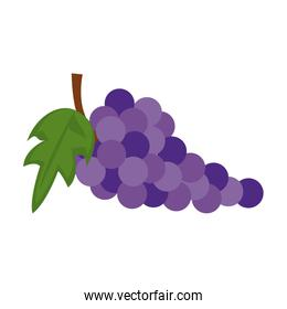 Grapes fruit isolated