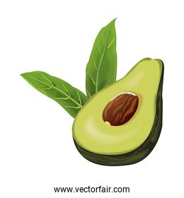 Avocado on half cut with leaves