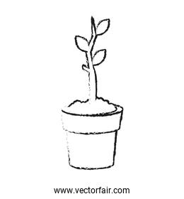 Plant growing on pot sketch