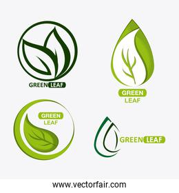 set of green leves design. nature icon. White background, graphic vector