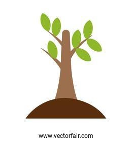Tree planted isolated