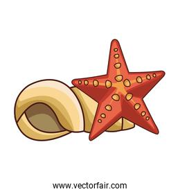 Shell and star sea