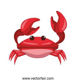 red Crabster Sea animal