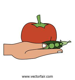Hand with tomato and peas fresh vegetables