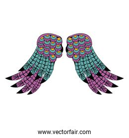 Bird wings isolated