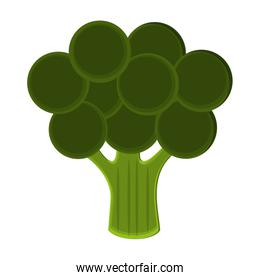 Broccoli vegetable food