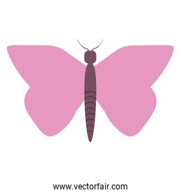 butterfly cartoon symbol isolated