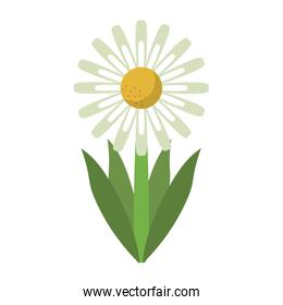 Beautiful flower with leaves cartoon