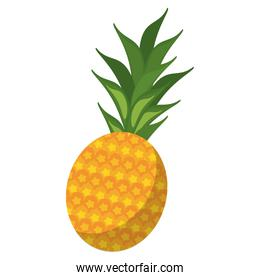 Pineapple tropical fruit isolated