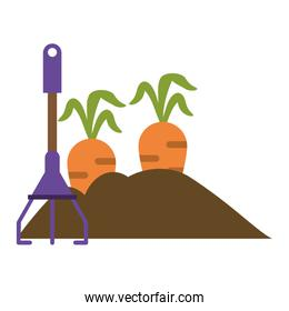 Garden with carrots and rake