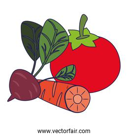 Tomato and carrot with radish blue lines