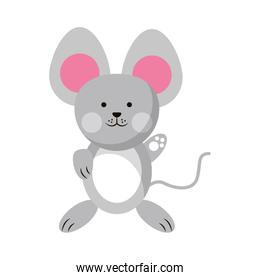 Mouse cute animal