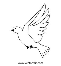 Dove bird flying cartoon in black and white